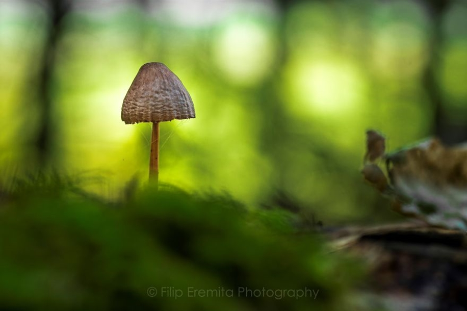 Beautiful pictures of mushrooms 16