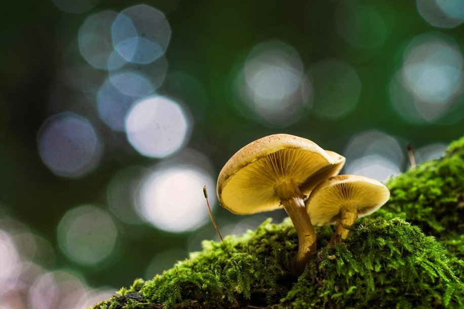Beautiful pictures of mushrooms 17