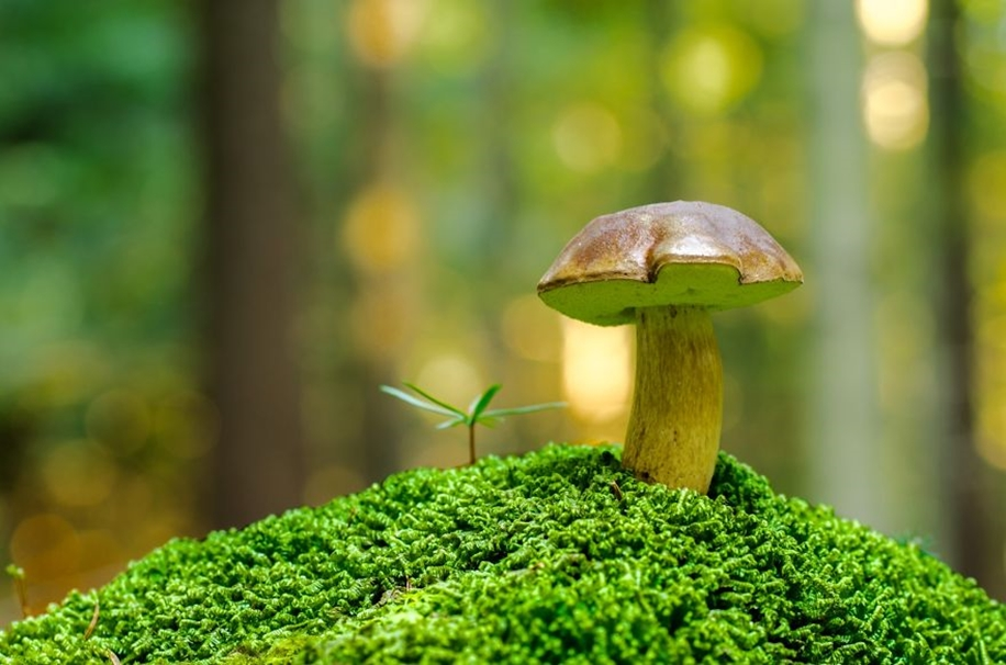 Beautiful pictures of mushrooms 19
