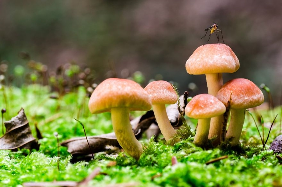 Beautiful pictures of mushrooms 20