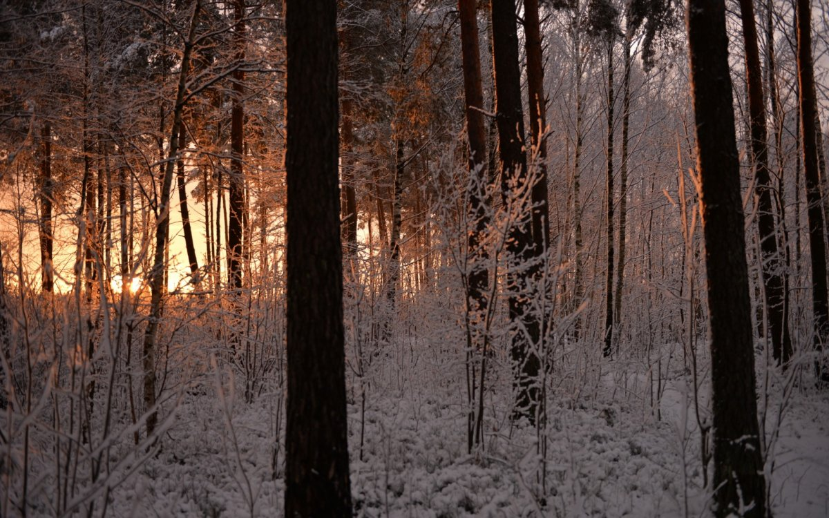 Beautiful pictures of winter 15