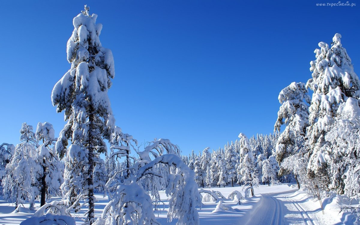 Beautiful winter photos 08
