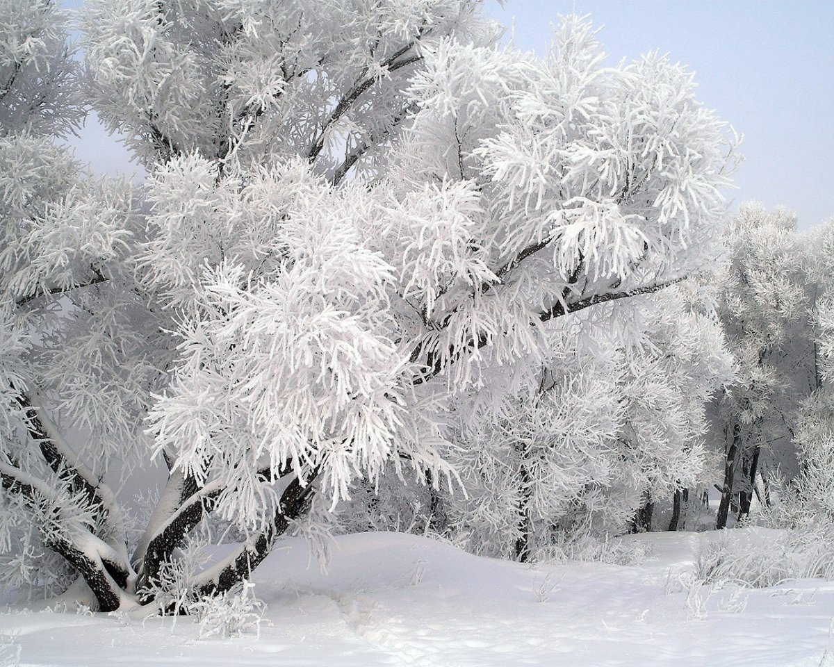 Beautiful winter photos 12