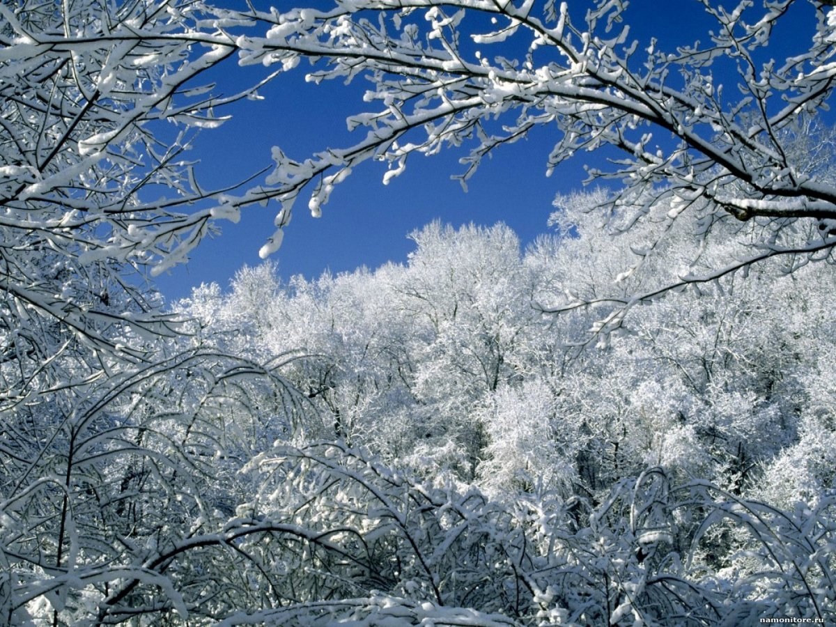Beautiful winter photos 15