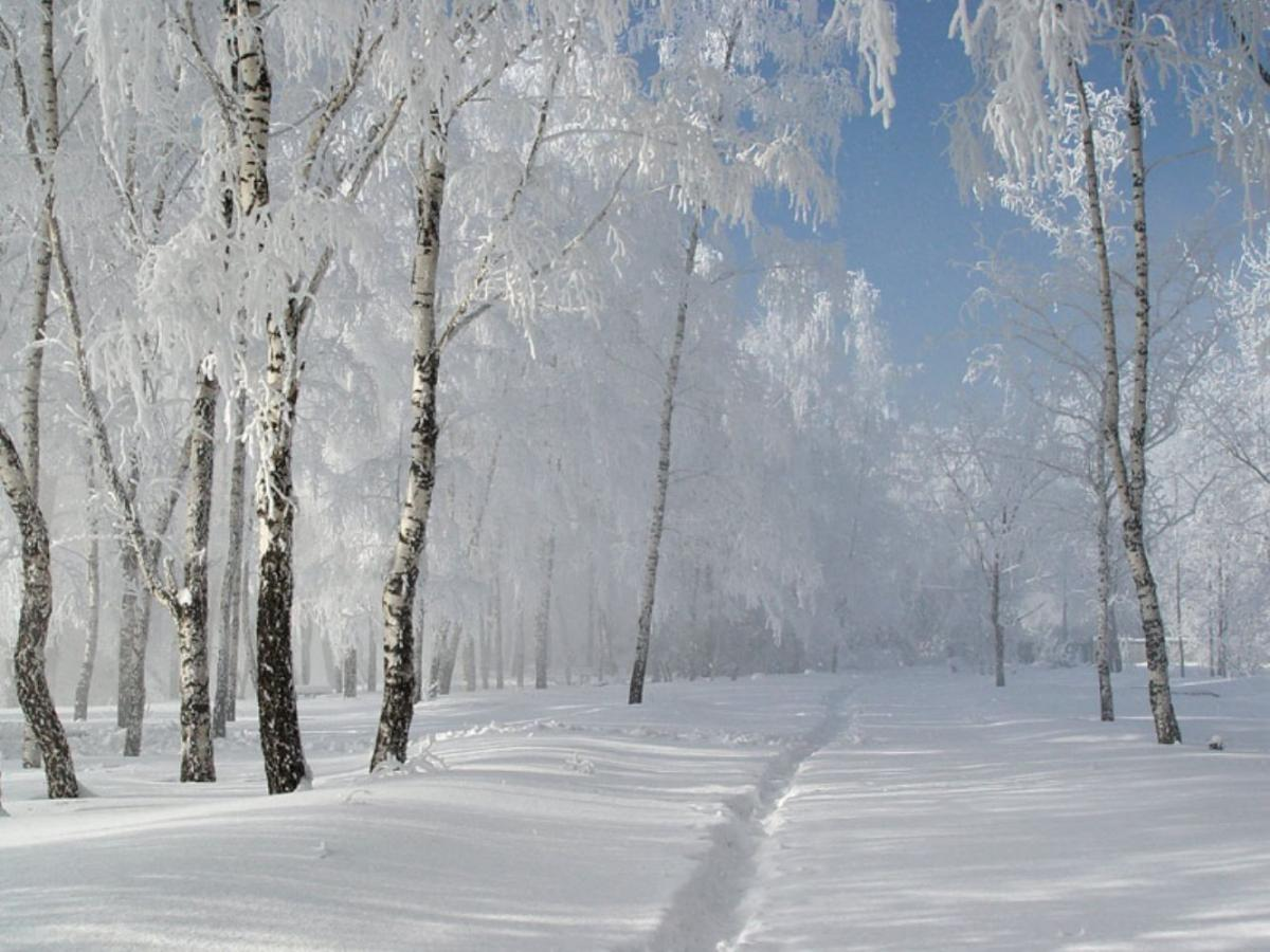 Beautiful winter photos 25