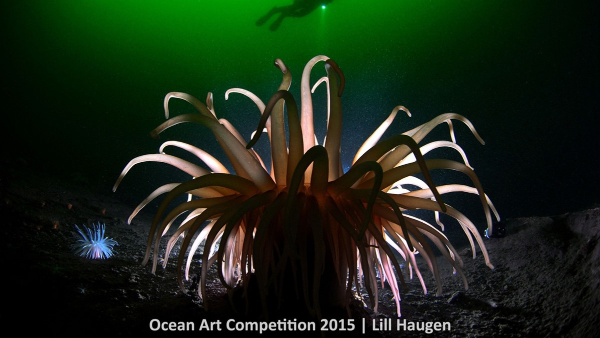 Best underwater photos 2015 show the mysteries of marine life 04