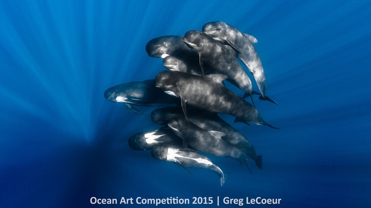 Best underwater photos 2015 show the mysteries of marine life 05