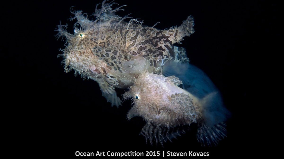 Best underwater photos 2015 show the mysteries of marine life 06