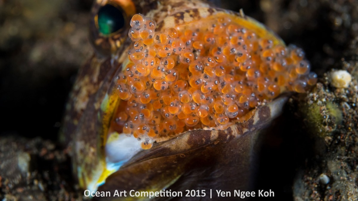 Best underwater photos 2015 show the mysteries of marine life 09
