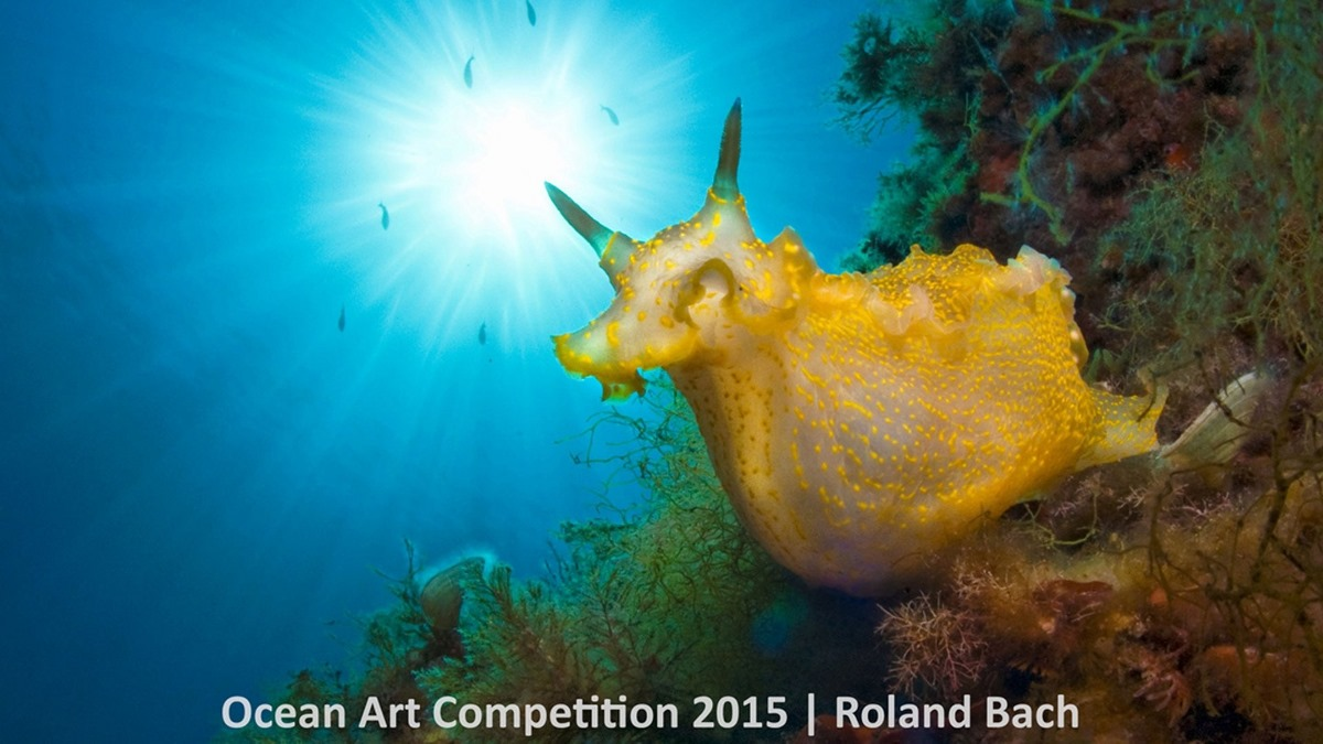 Best underwater photos 2015 show the mysteries of marine life 14