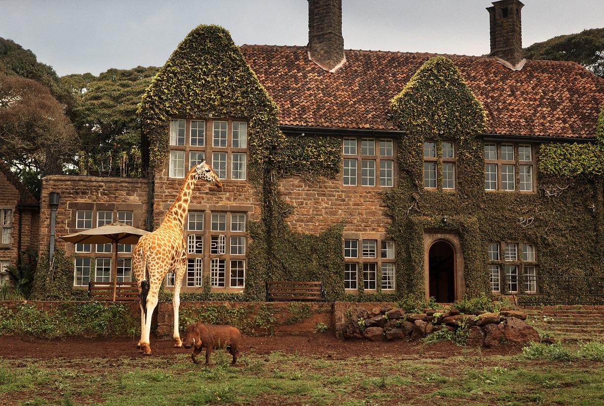 Breakfast with giraffes 04
