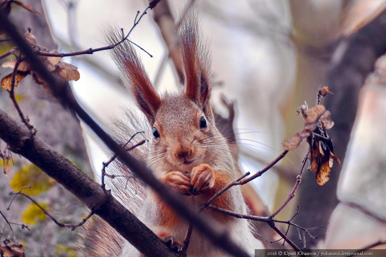 Caught A Squirrel 01