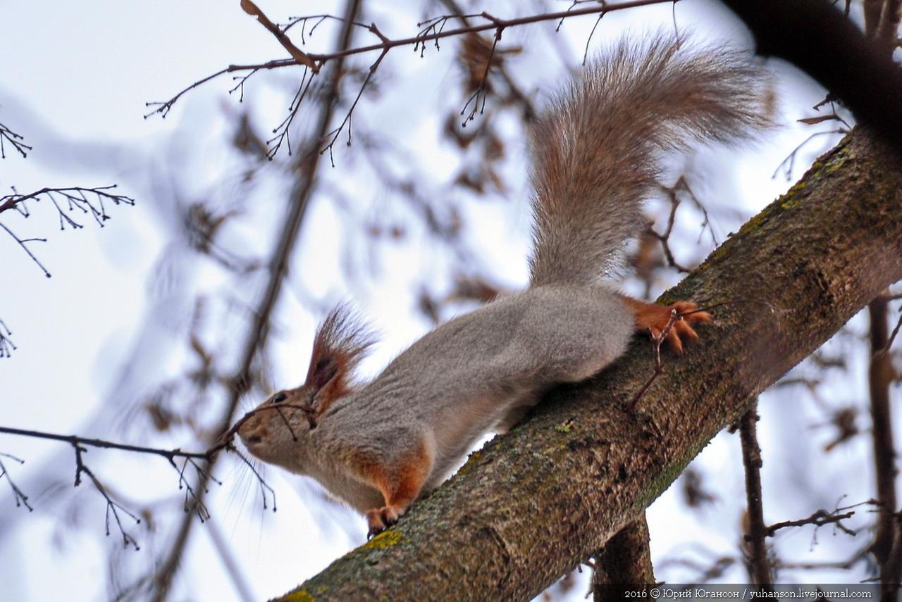 Caught A Squirrel 03