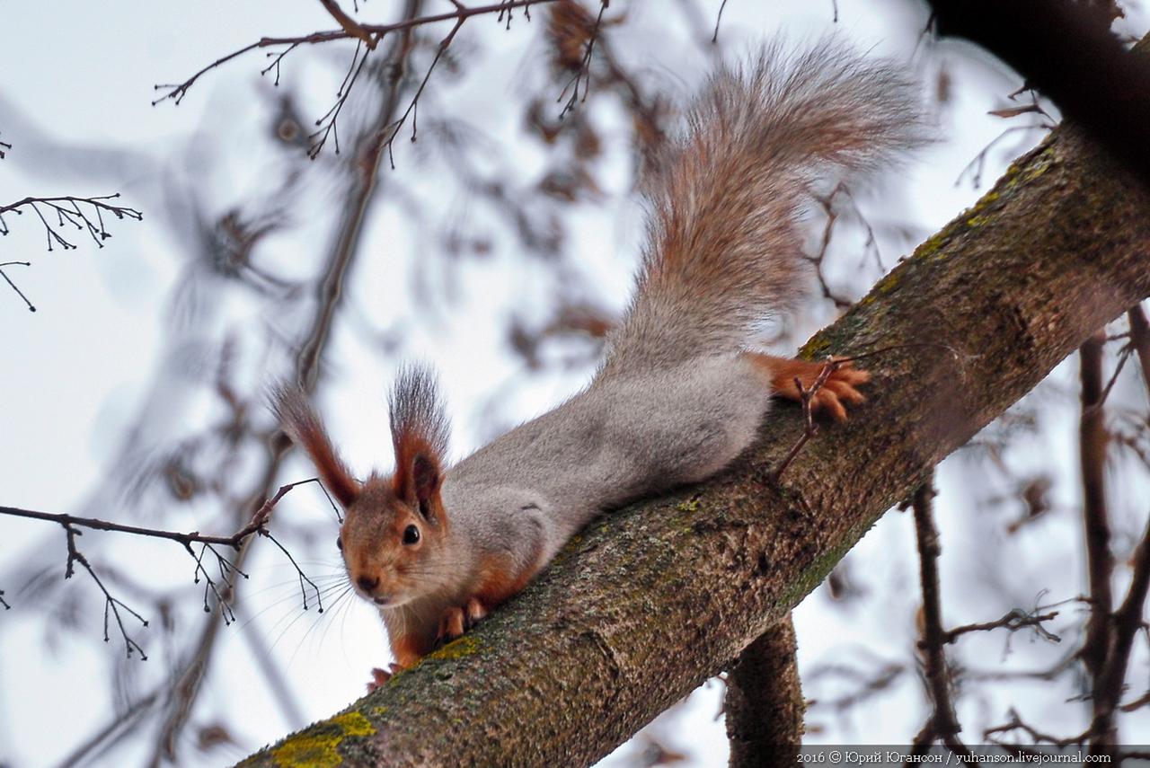 Caught A Squirrel 04
