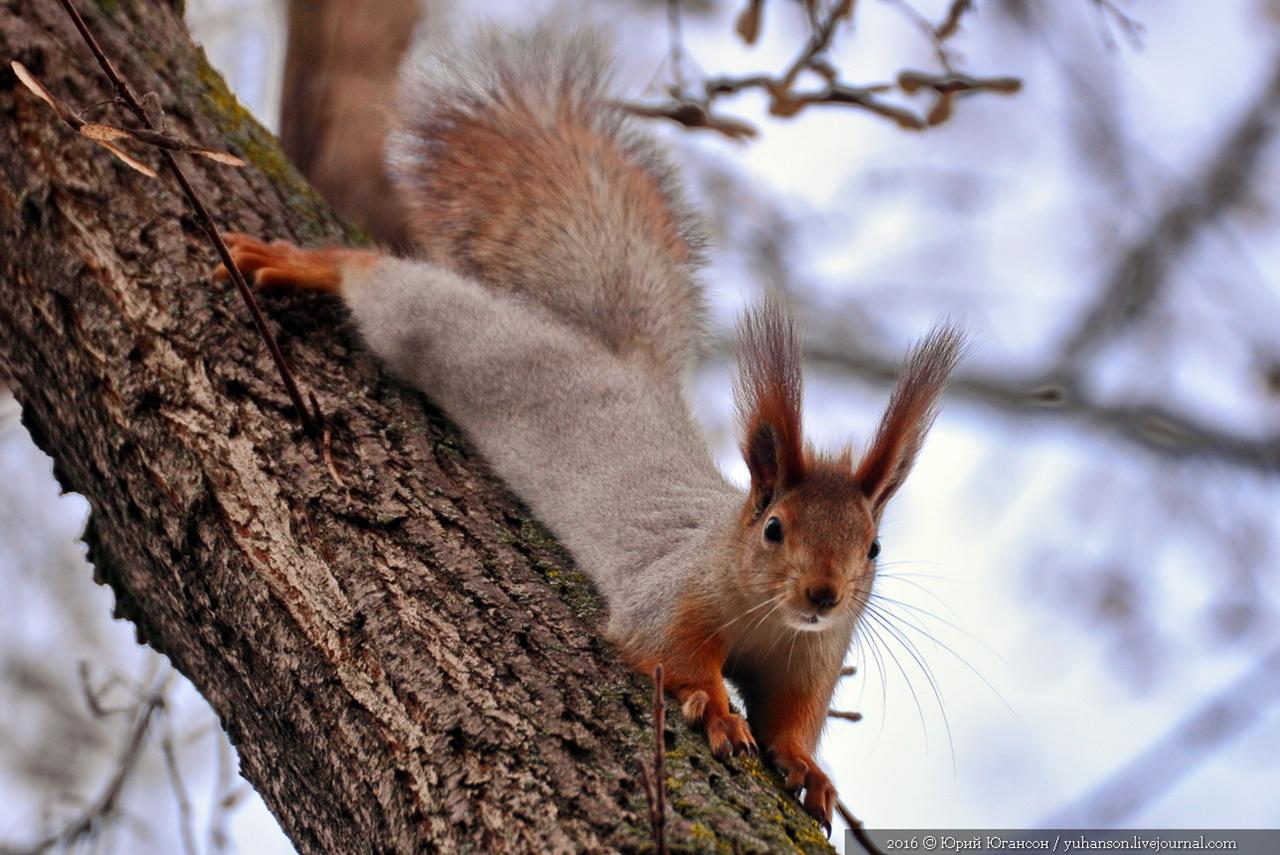Caught A Squirrel 05