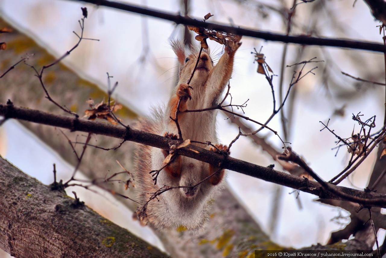 Caught A Squirrel 08
