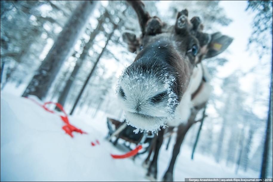 Deer 05