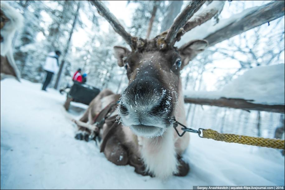 Deer 07