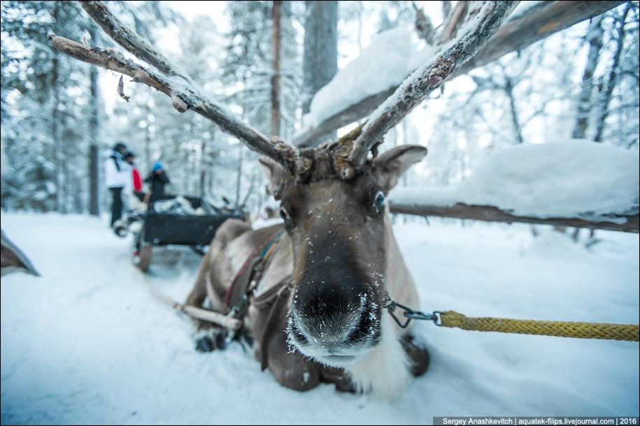 Deer 08