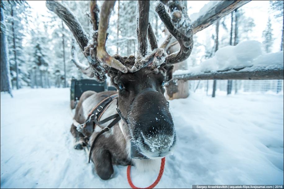 Deer 09