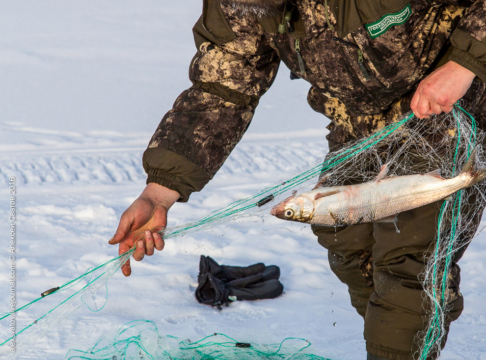 Fighting the poachers on lake Baikal 07