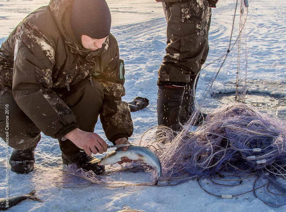Fighting the poachers on lake Baikal 10