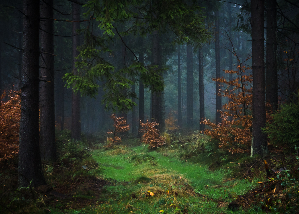 Forests by Alex Wesche 01