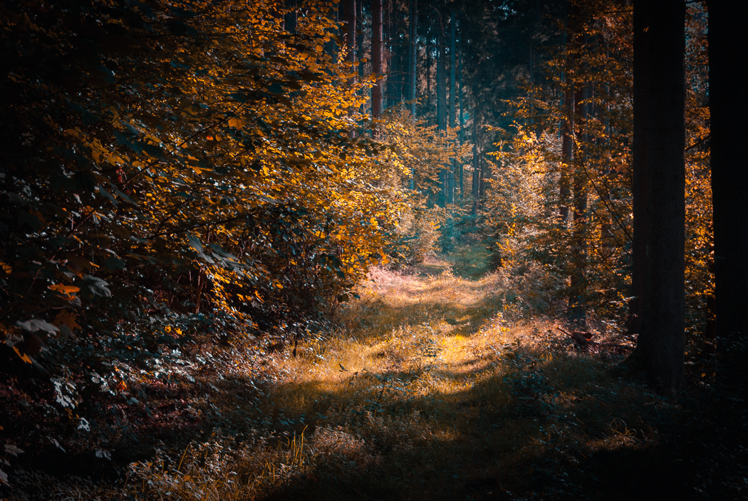 Forests by Alex Wesche 05