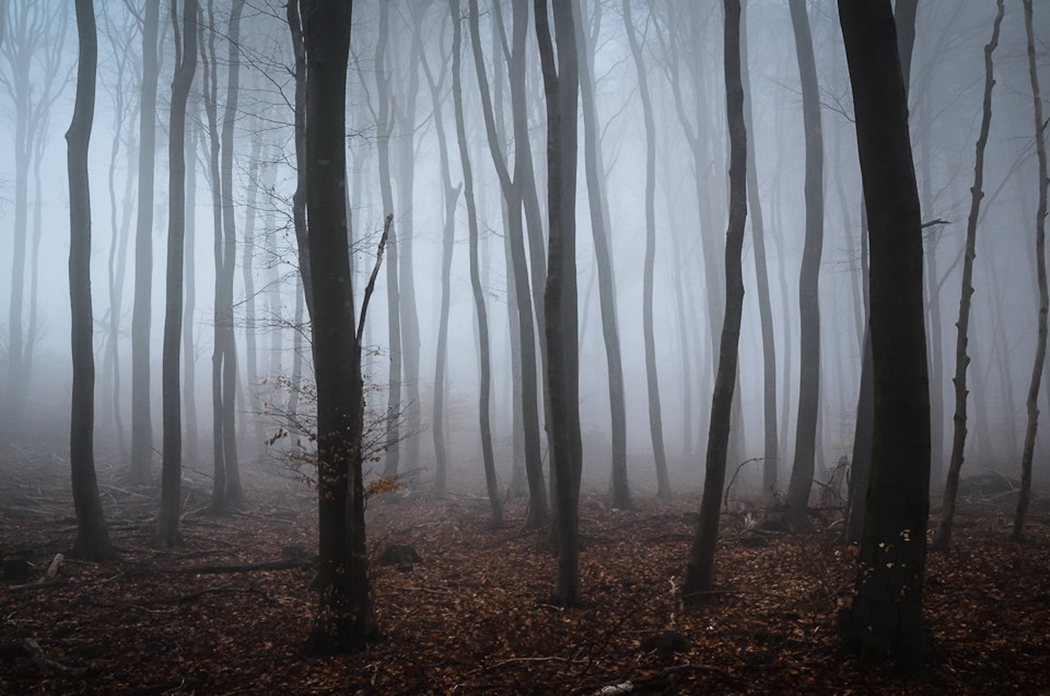 Forests by Alex Wesche 10