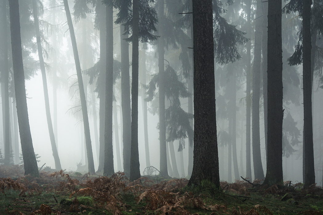 Forests by Alex Wesche 15