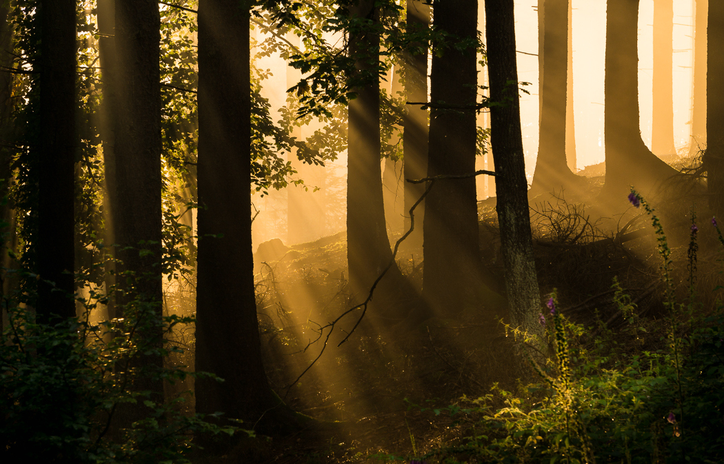 Forests by Alex Wesche 19
