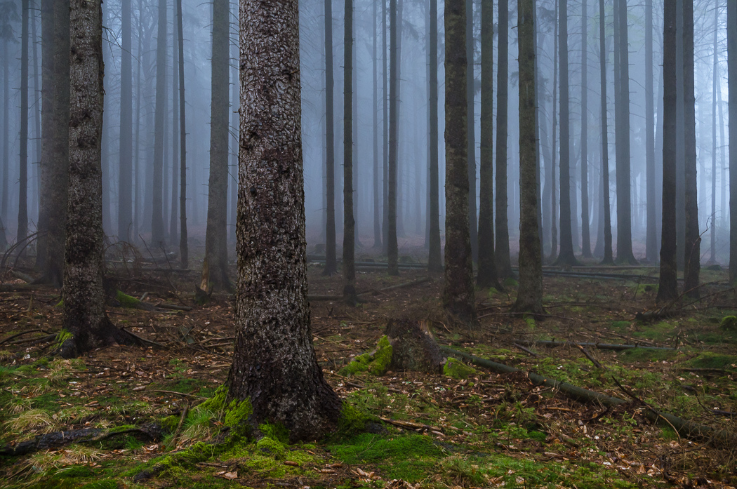 Forests by Alex Wesche 29