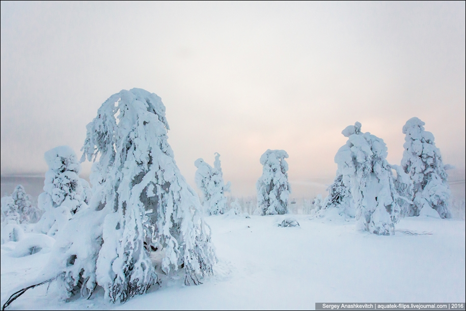 Frosty Lapland 07