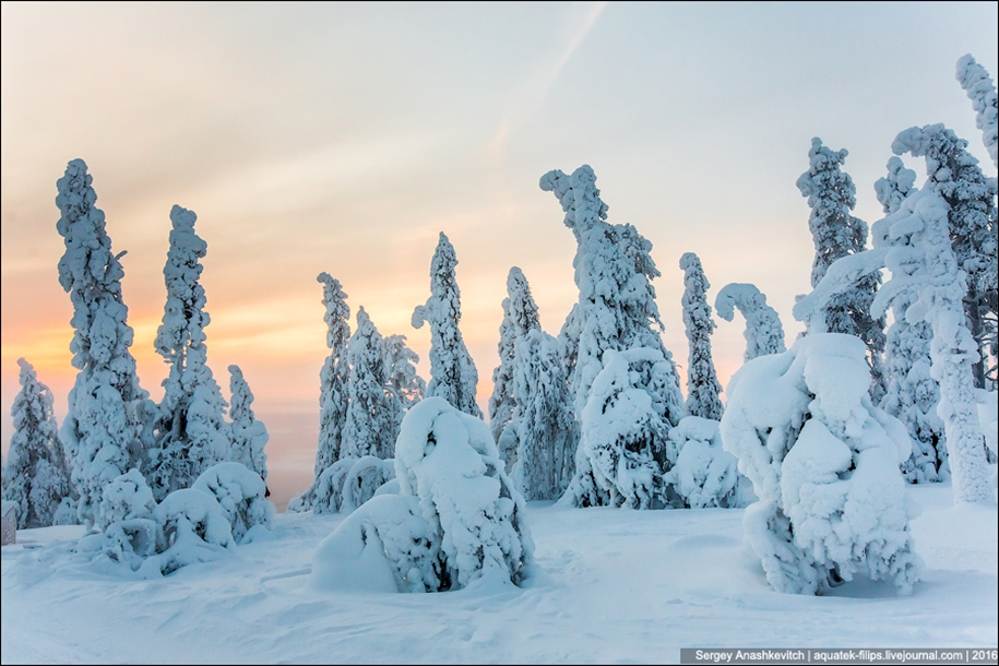 Frosty Lapland 12