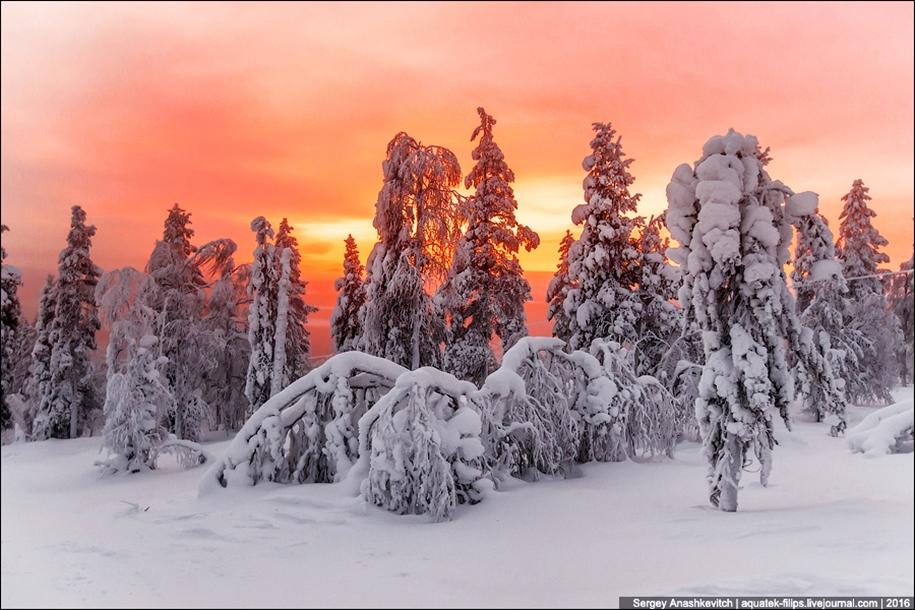 Frosty Lapland 15
