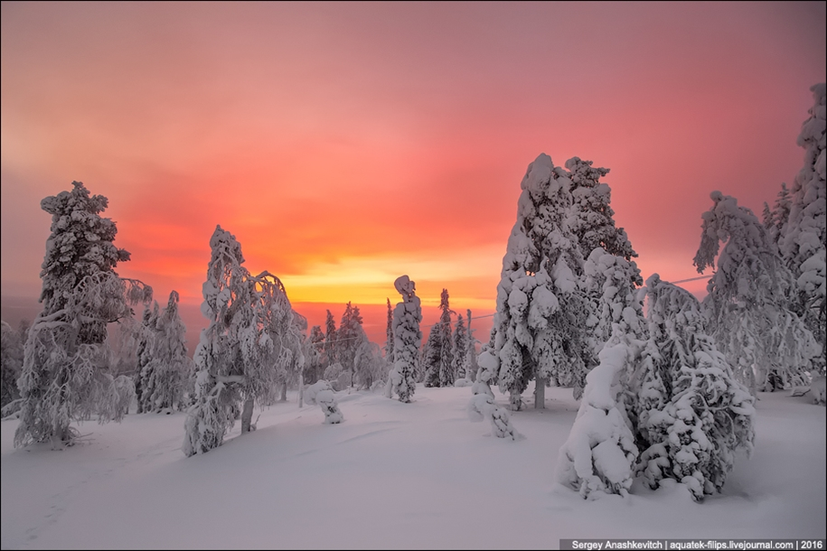 Frosty Lapland 18
