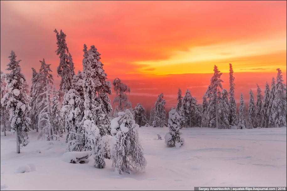 Frosty Lapland 21