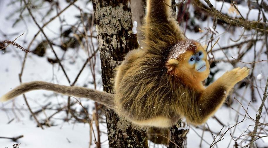 Fun games Golden monkeys. The joy of snow 03