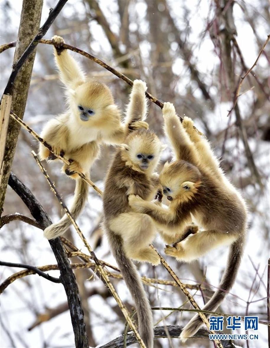 Fun games Golden monkeys. The joy of snow 05