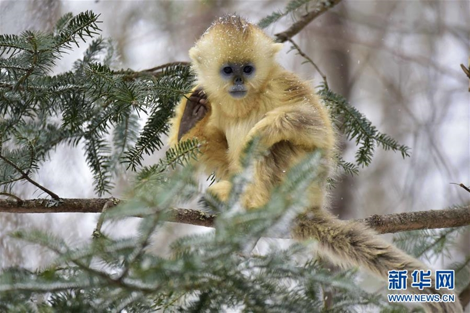 Fun games Golden monkeys. The joy of snow 07