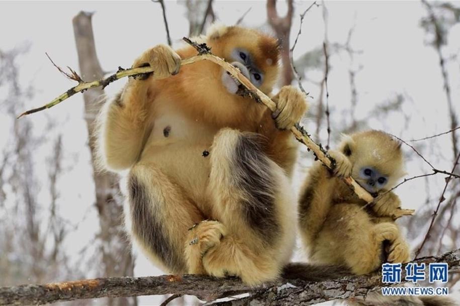 Fun games Golden monkeys. The joy of snow 08