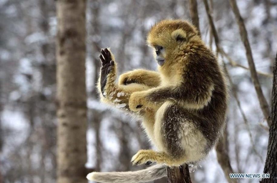 Fun games Golden monkeys. The joy of snow 09