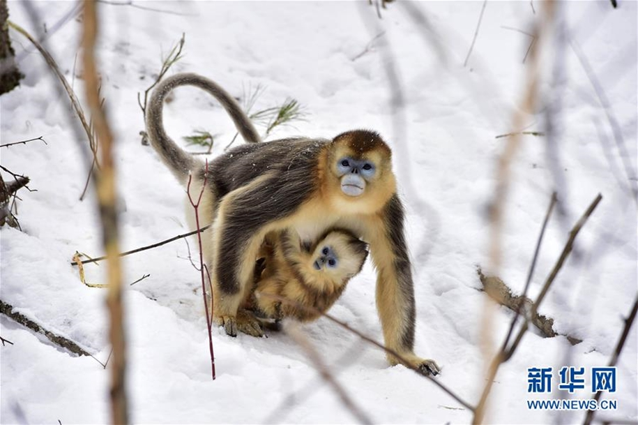 Fun games Golden monkeys. The joy of snow 10
