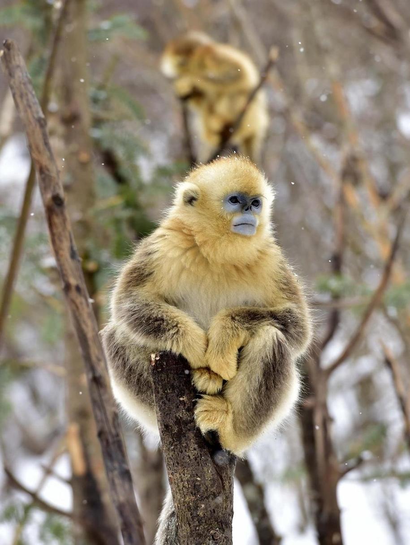 Fun games Golden monkeys. The joy of snow 11