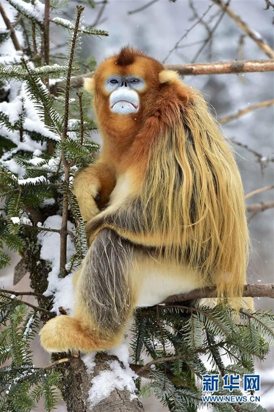 Fun games Golden monkeys. The joy of snow 12
