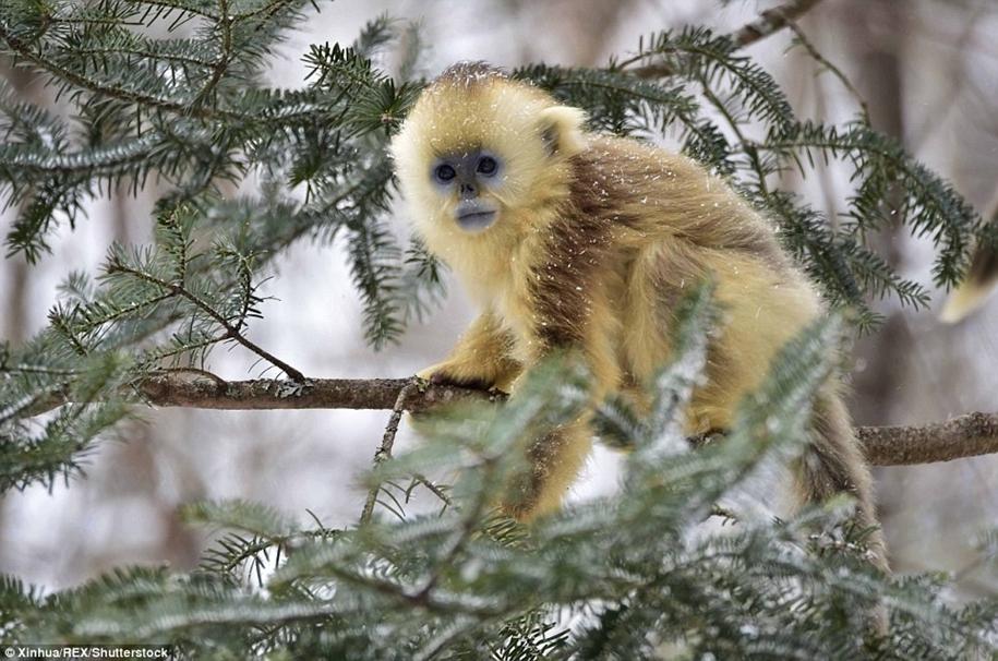 Fun games Golden monkeys. The joy of snow 13