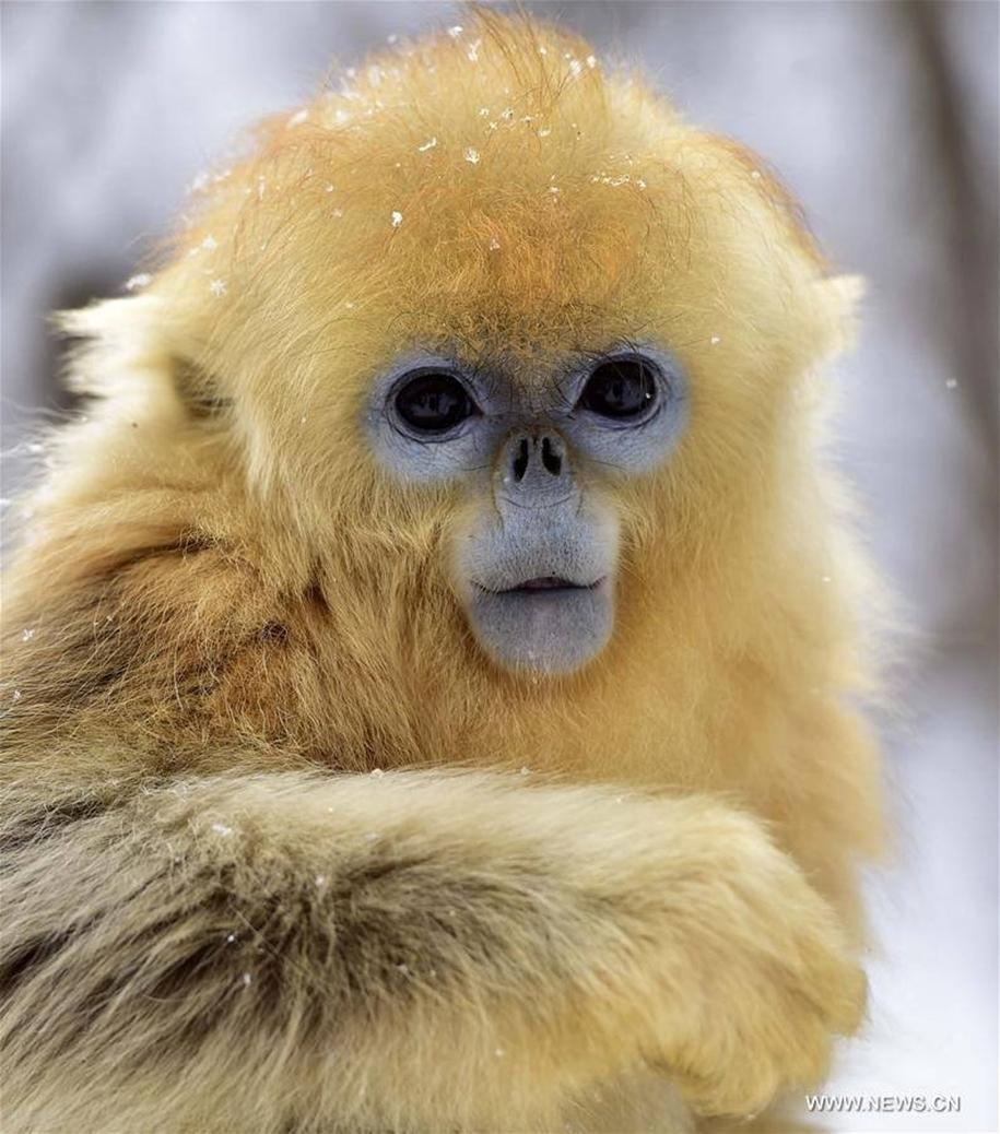 Fun games Golden monkeys. The joy of snow 14
