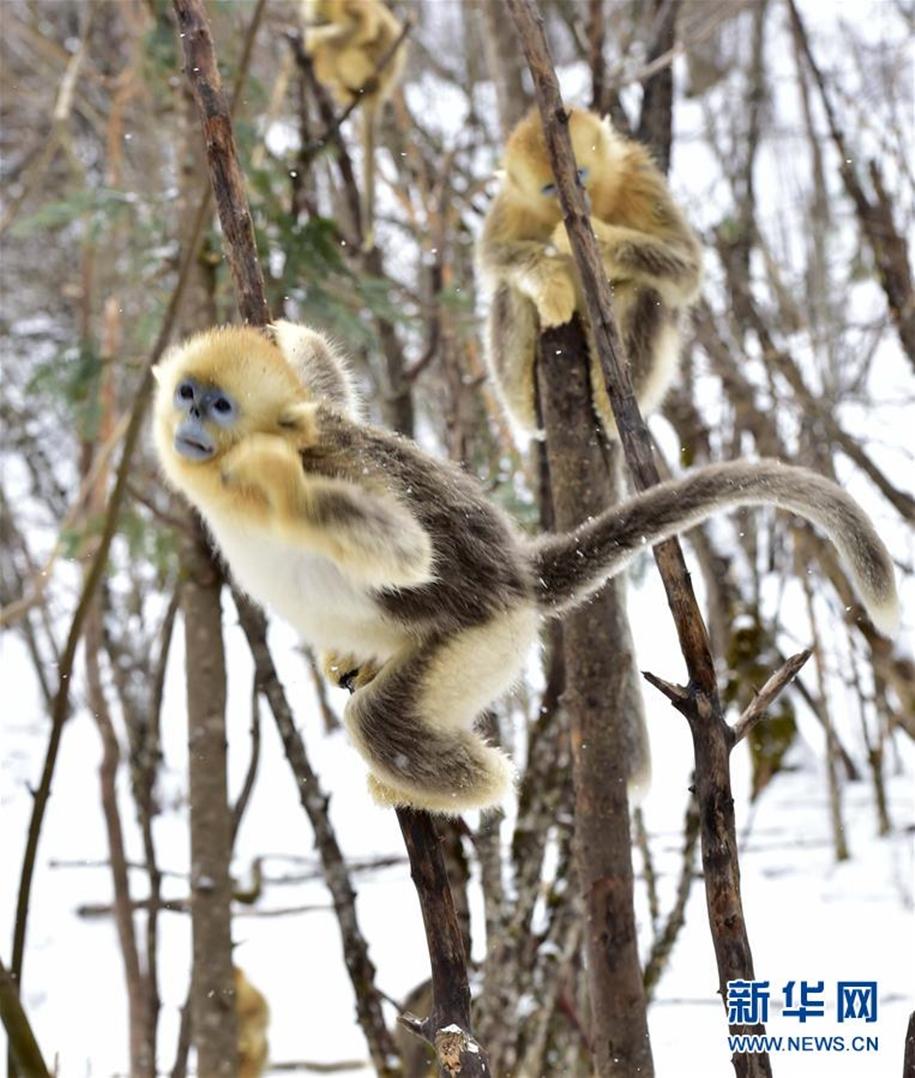Fun games Golden monkeys. The joy of snow 15
