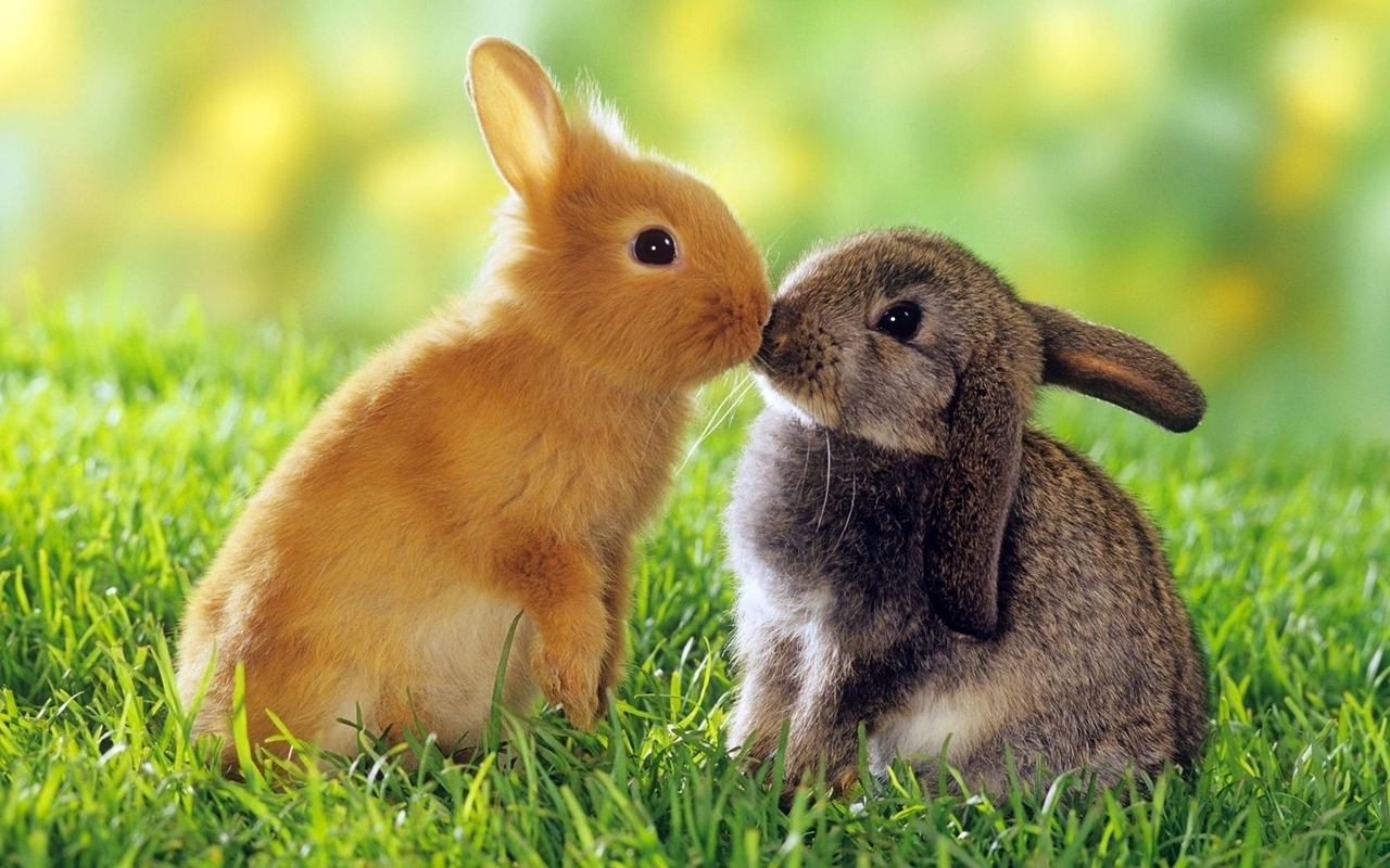 Funny and cute rabbits 01