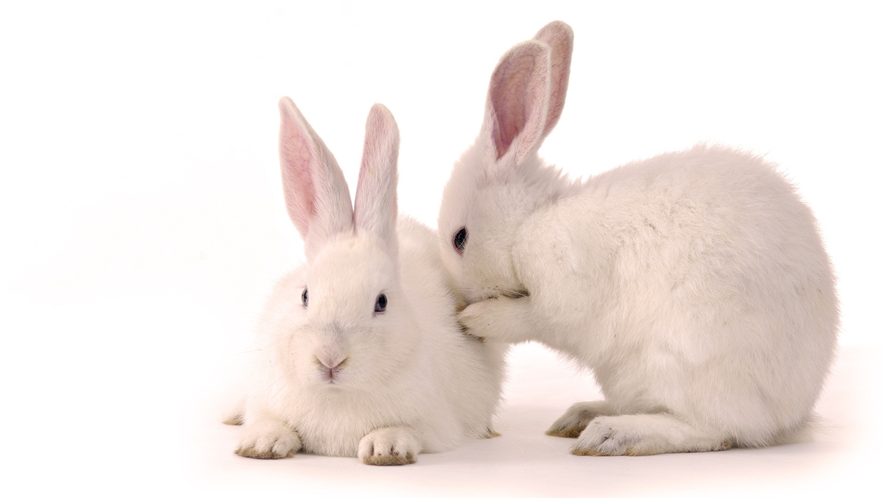 Funny and cute rabbits 02
